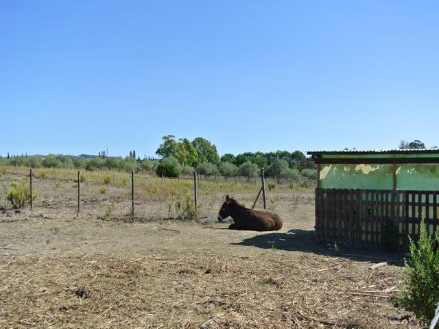 sardinie - agriturismo i vigneti nabij alghero (8).jpg