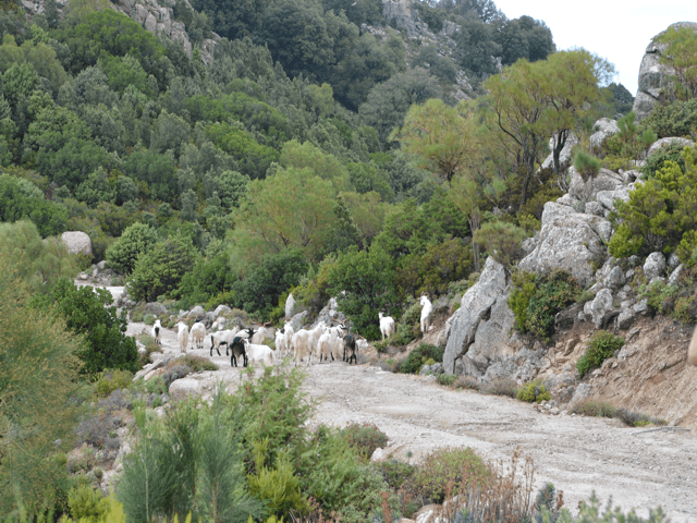 sa portisca landschap_natuurpark_sardinie-4.png
