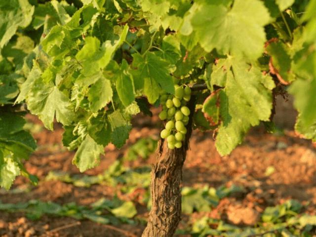 agriturismo-bonsai-alghero-sardinie (5).png