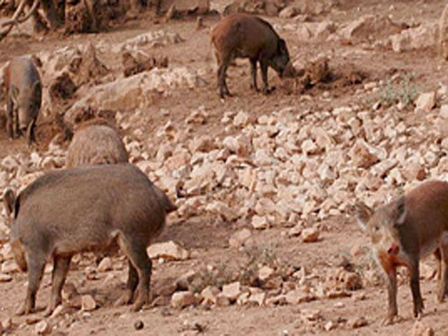 Boerderij - Podere Monte Sixeri - Alghero - Sardinië