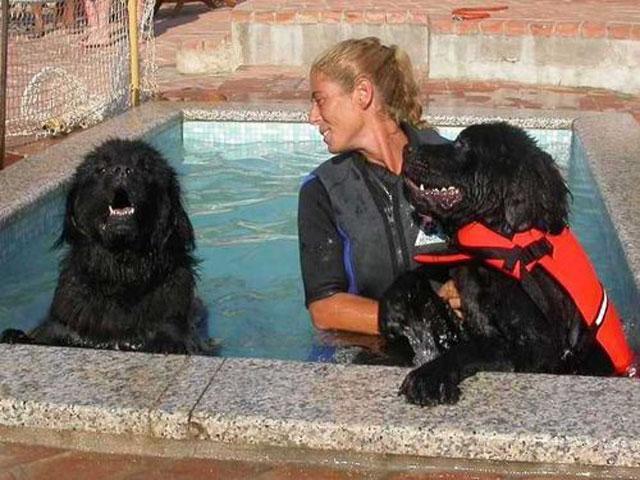 Zwembad voor honden - Residence Capriccioli - Sardinië