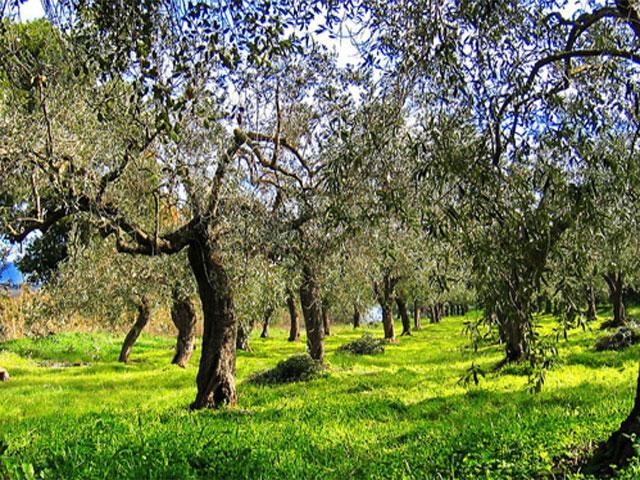 Tuin - Agriturismo Su Leunaxiu - Soleminis - Sardinië