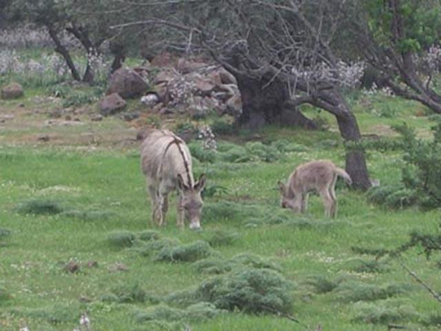 Agriturismo Sardinie - Dorgali - Boerderij Neule (22)